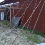 Stangen für die Bohnen, die Tomaten haben ein eigenes Dach bekommen