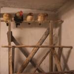 Die Hühner auf der Stange