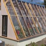 Das fast fertige Gewächshaus mit Bepflanzung am 31. Mai